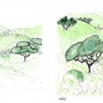 vegetation patterns and forms