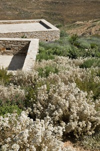 Cedar. Oliaros development. Antiparos, Greece. Landscape architecture by doxiadis+. Photo by Cathy Cunliffe 2009.
