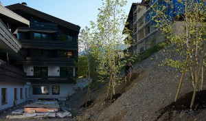 planting a steep slope